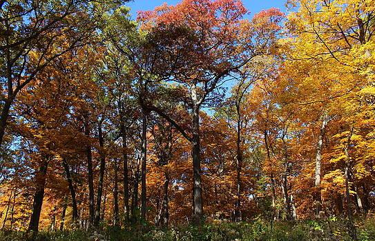 Rosanne Jordan - Autumns Rainbow of Color