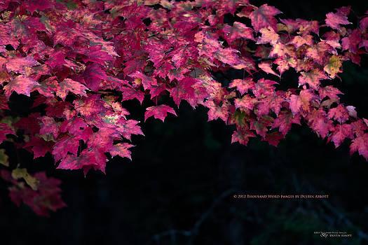 Autumn's Splendor by Dustin Abbott