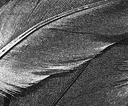 Chris Berry - Avian