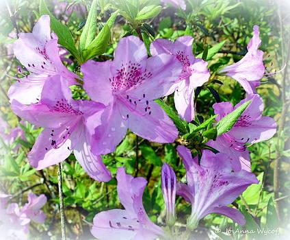 Azaleas In Bloom by Jo Anna Wycoff