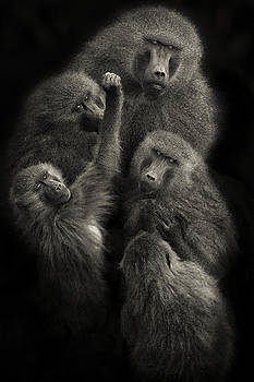 Baboons United by Mario Moreno