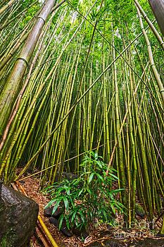 Jamie Pham - Baby Bamboo