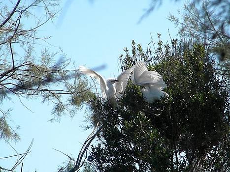 Baby birds fighting by Manuela Constantin