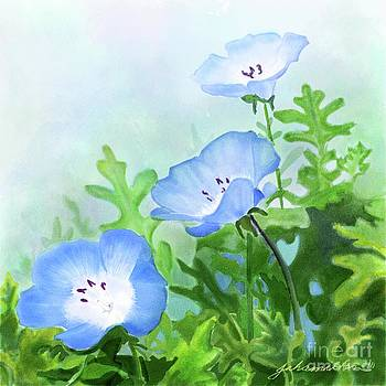 Baby Blue Eyes by Joan A Hamilton