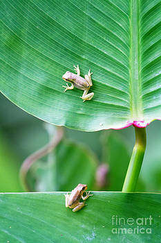 Baby Frogs by Stephanie Hayes