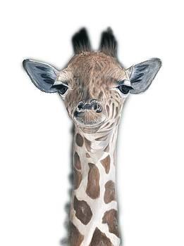 Baby Giraffe by Pat Gilmore