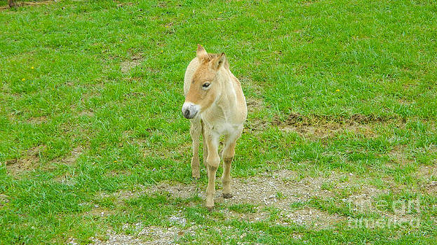 Baby Horse by K L Roberts