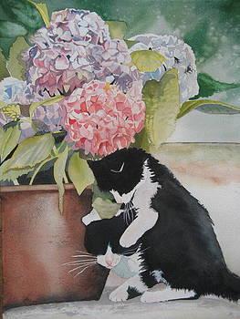 Baby Kitties by Stephanie Zobrist