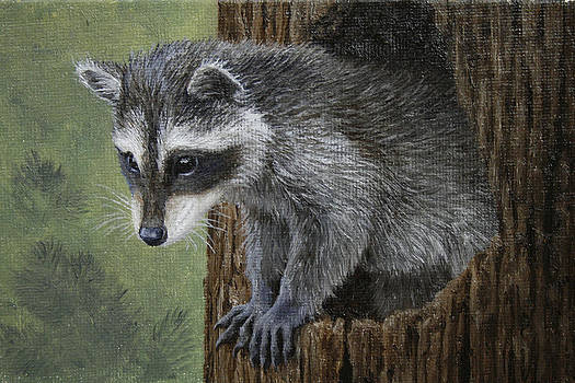 Crista Forest - Baby Raccoon