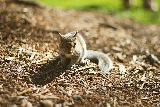 Baby Squirrel by David Schoenheit