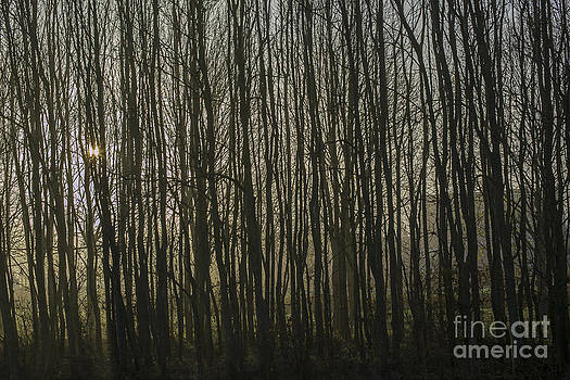 Patricia Hofmeester - Background of trees in mist