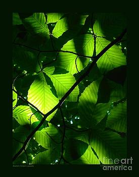 Backlit Green Leaves by Patricia Overmoyer