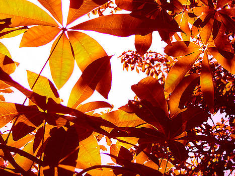 Amy Vangsgard - Backlit Tree Leaves 2