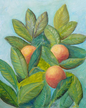 Backyard Florida Oranges by Patty Weeks