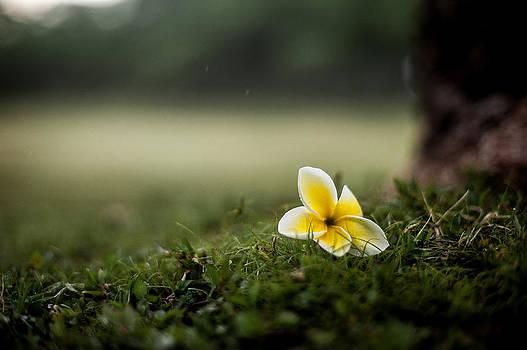 Backyard flower by Jason Bartimus