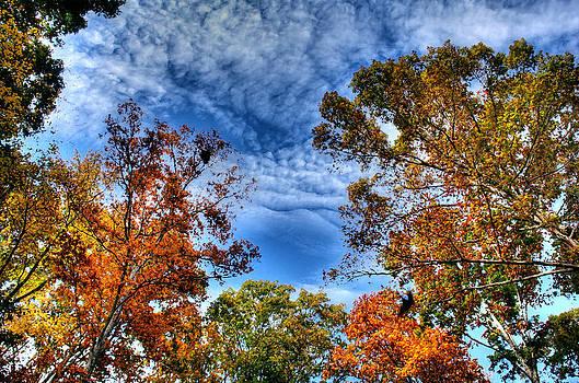 Backyard trees drybrush by Andy Lawless
