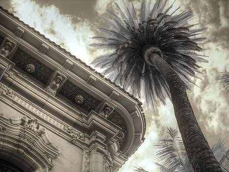 Balboa Park Palm Tree by Jane Linders