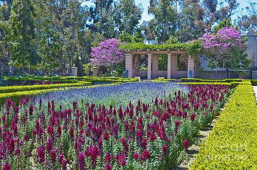 David  Zanzinger - Balboa Park San Diego California 2