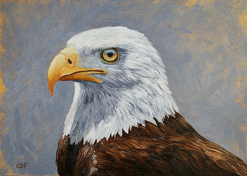 Crista Forest - Bald Eagle Portrait