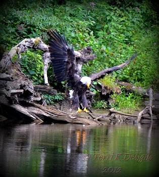 Bald Eagle by Terri K Designs
