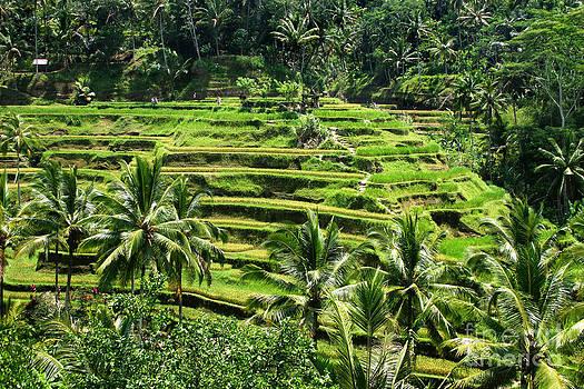 Balinese Dream by Lars Ruecker