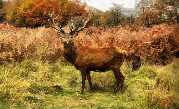 Balmoral Buck by Francisco Sanchez Salas