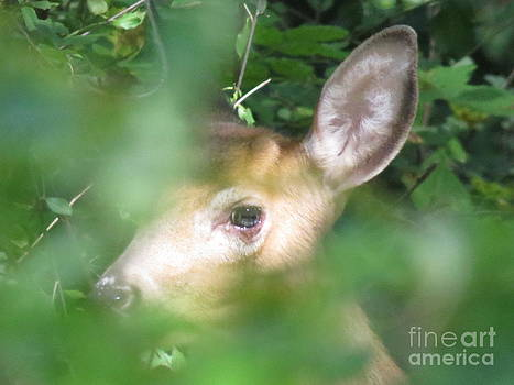 Bambi in the Woods by David Lankton