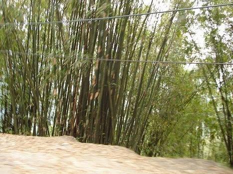 Bamboo by Aparna Suriaraj
