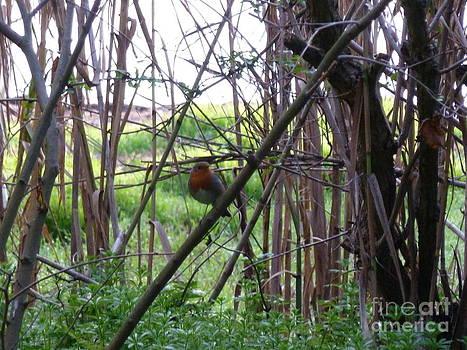 Bamboo Bird by Rogerio Mariani