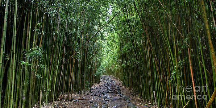 Bamboo Forest Trail Hana Maui by Dustin K Ryan