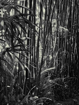 Bamboo by Guillermo Rodriguez