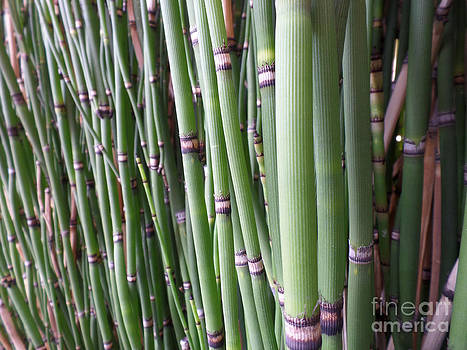 Bamboo by HEVi FineArt