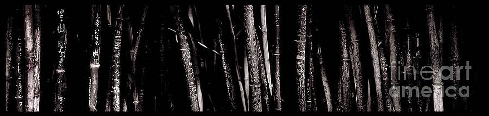 Bamboo by Ron Smith