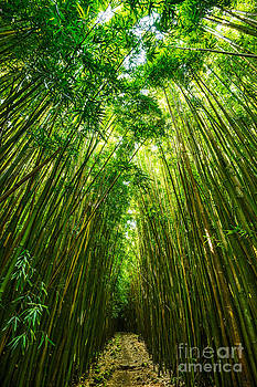 Jamie Pham - Bamboo Sky - the magical and mysterious bamboo forest of Maui.