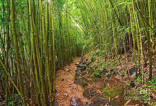 Jamie Pham - Bamboo Trail - Maui