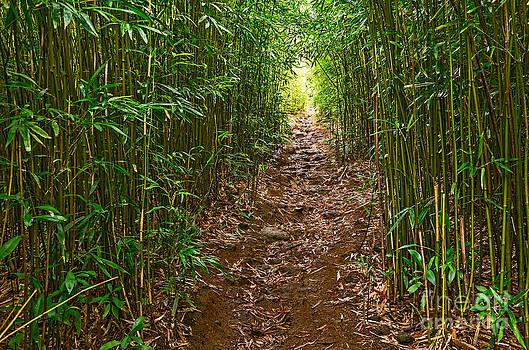 Jamie Pham - Bamboo Trail