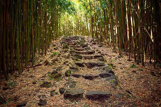 Bamboo Trail by Jen Morrison