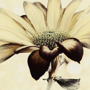 Banana Nut Muffin by Darlene Kwiatkowski