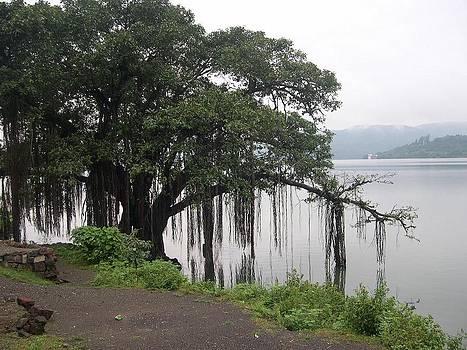 Banyan tree by Joe Zachariah