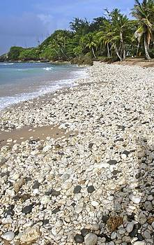 Jennifer Lamanca Kaufman - Barbados Bathsheba tumbled rocks seashells