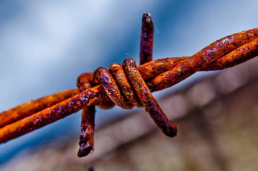 Barbed by William Shevchuk