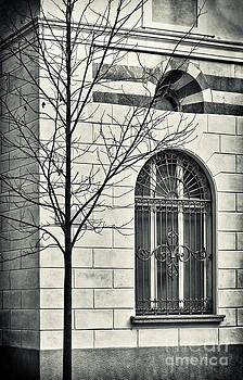 Silvia Ganora - Bare tree with window