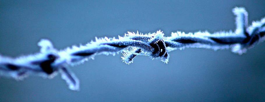 Bared wire by Karen Grist