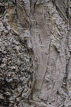 Marilyn Wilson - Textured Tree Bark