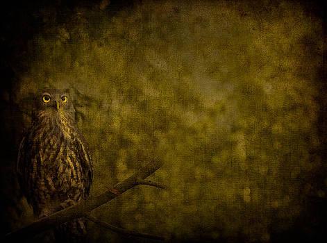 Shari Mattox - Barking Owl