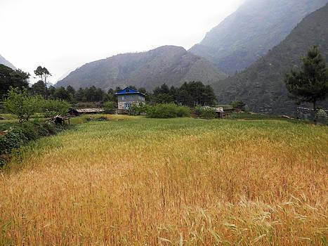 Barley Farm 2 by Pema Hou