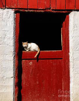 Andrea Kollo - Barn Cat