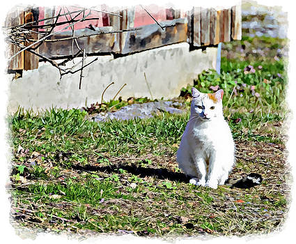 Barn Cat by Susan Leggett