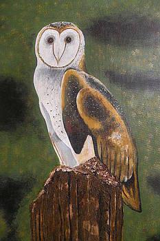 Barn Owl by Carol Northington