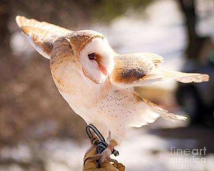 Barn Owl in the Breeze by Lori England Zornes